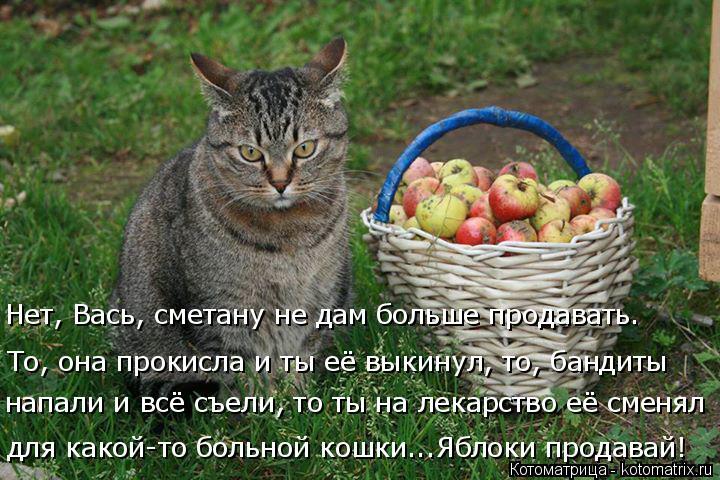 Котоматрица: для какой-то больной кошки...Яблоки продавай! То, она прокисла и ты её выкинул, то, бандиты  Нет, Вась, сметану не дам больше продавать. напали ?