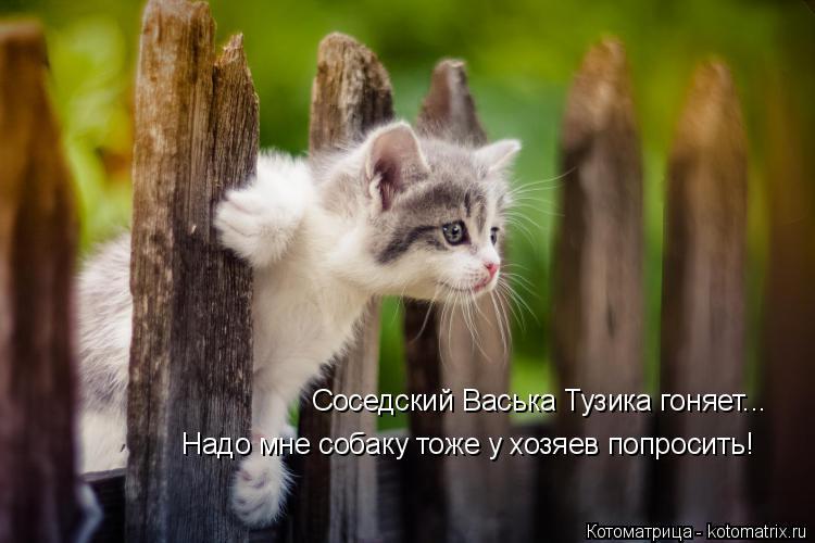 Котоматрица: Соседский Васька Тузика гоняет... Надо мне собаку тоже у хозяев попросить!
