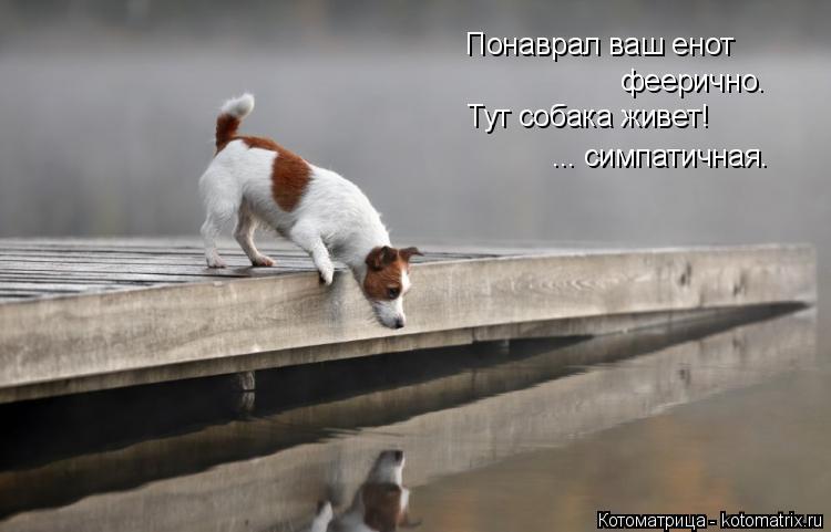 Котоматрица: Понаврал ваш енот феерично. Тут собака живет! ... симпатичная.