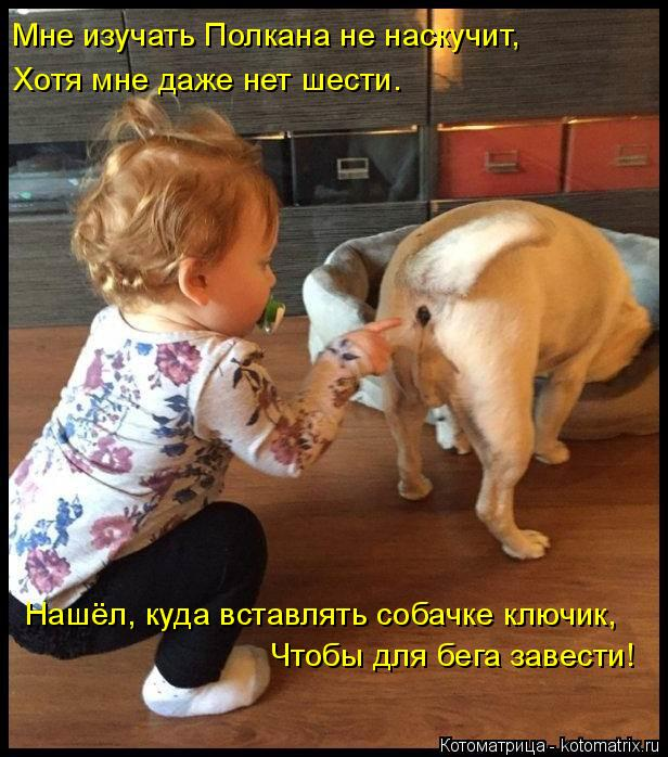 Котоматрица: Мне изучать Полкана не наскучит,  Хотя мне даже нет шести. Нашёл, куда вставлять собачке ключик, Чтобы для бега завести!