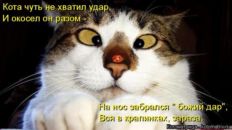"""Котоматрица: Кота чуть не хватил удар, И окосел он разом - На нос забрался """" божий дар"""", Вся в крапинках, зараза."""