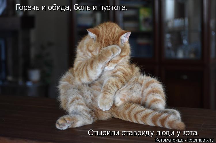 Котоматрица: Горечь и обида, боль и пустота. Стырили ставриду люди у кота.