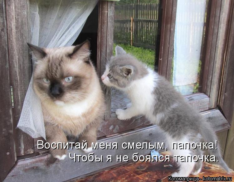 Котоматрица: Воспитай меня смелым, папочка!  Чтобы я не боялся тапочка.