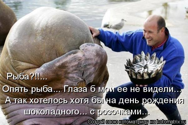 Котоматрица: Рыба?!!... Опять рыба... Глаза б мои ее не видели... А так хотелось хотя бы на день рождения шоколадного... с розочками...