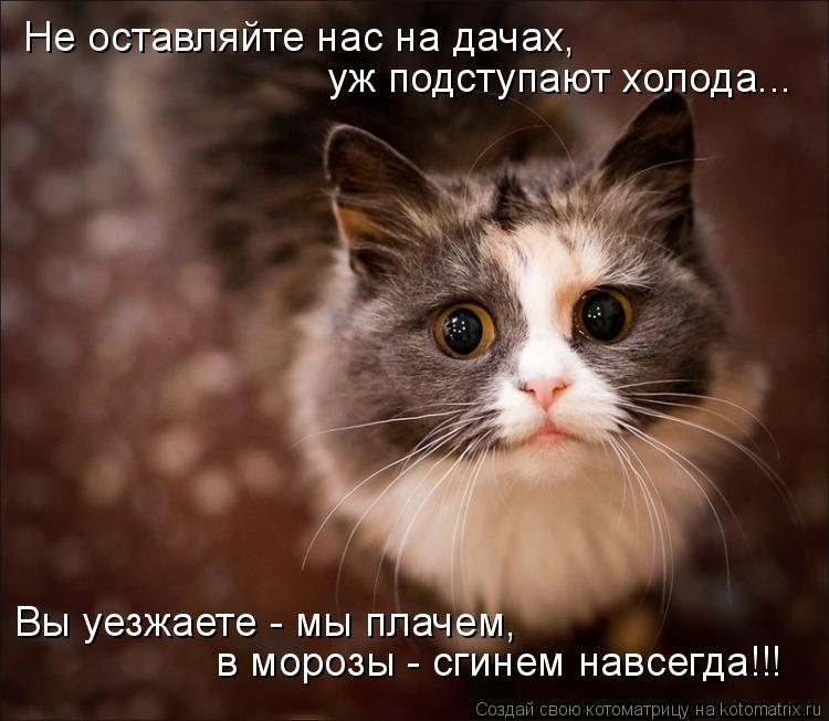 Котоматрица: Не оставляйте нас на дачах, уж подступают холода... Вы уезжаете - мы плачем, в морозы - сгинем навсегда!!!