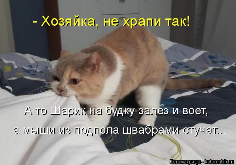 Котоматрица: - Хозяйка, не храпи так!  А то Шарик на будку залез и воет,  а мыши из подпола швабрами стучат...