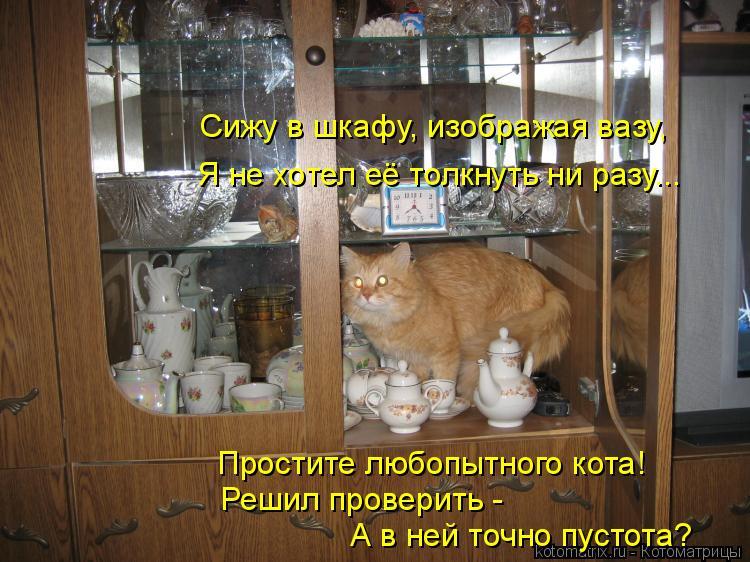Котоматрица: Сижу в шкафу, изображая вазу, Я не хотел её толкнуть ни разу... Простите любопытного кота! Решил проверить -  А в ней точно пустота?
