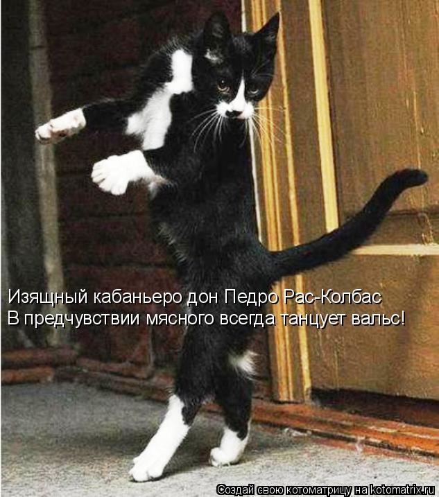 Котоматрица: Изящный кабаньеро дон Педро Рас-Колбас В предчувствии мясного всегда танцует вальс!