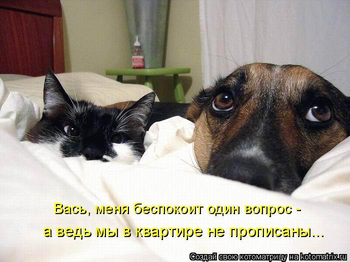 Котоматрица: Вась, меня беспокоит один вопрос - а ведь мы в квартире не прописаны...