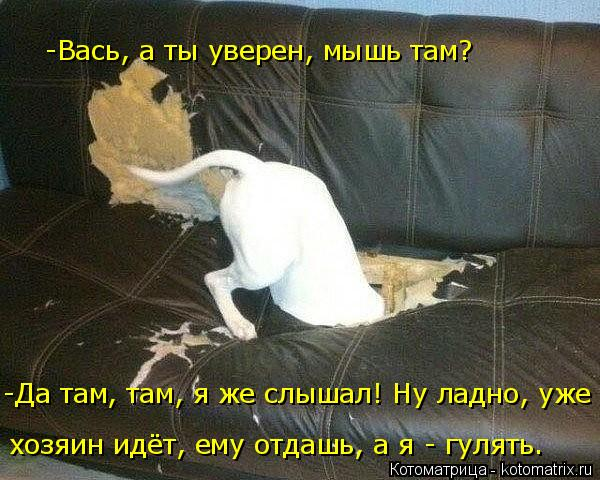 Котоматрица: хозяин идёт, ему отдашь, а я - гулять. -Да там, там, я же слышал! Ну ладно, уже -Вась, а ты уверен, мышь там?