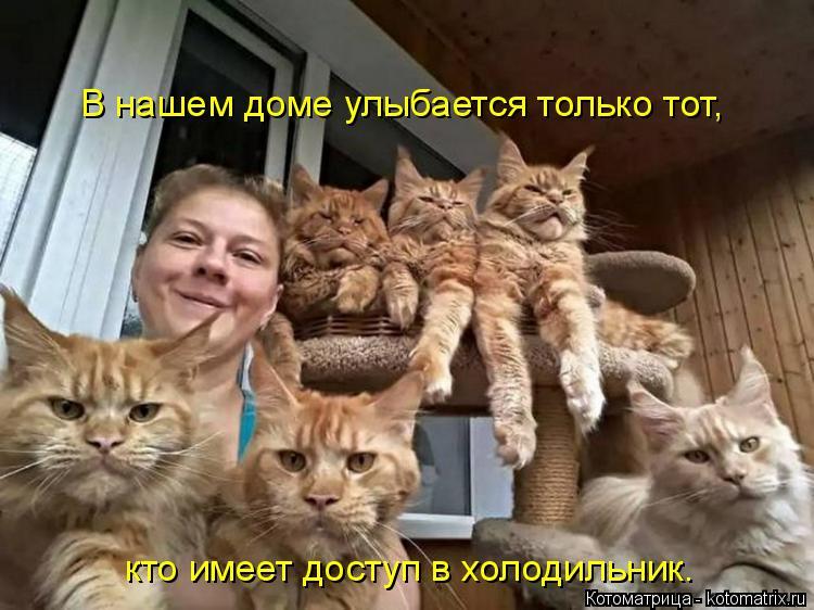Котоматрица: В нашем доме улыбается только тот,  кто имеет доступ в холодильник.