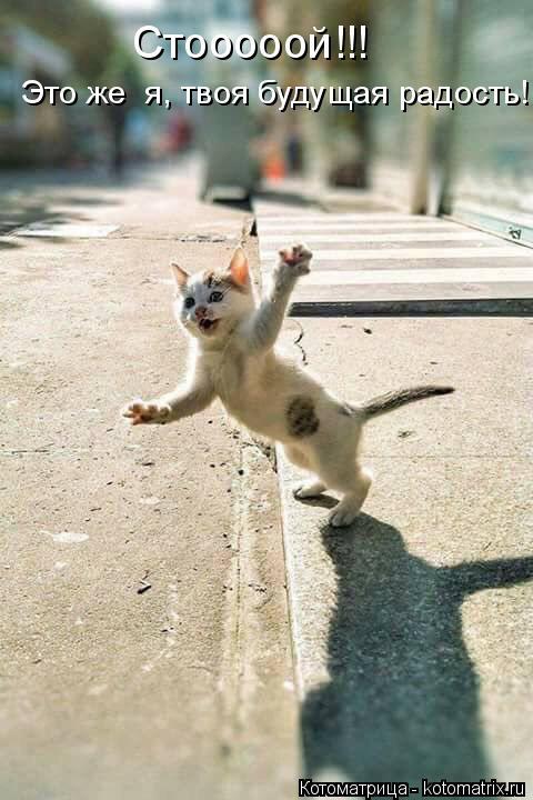 Котоматрица: Стооооой!!!  Это же  я, твоя будущая радость!