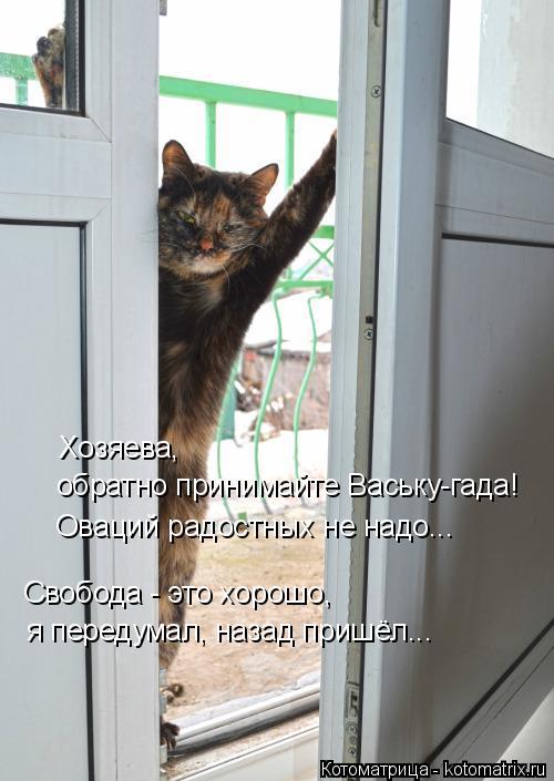 Котоматрица: Свобода - это хорошо,  я передумал, назад пришёл... Хозяева,  обратно принимайте Ваську-гада! Оваций радостных не надо...