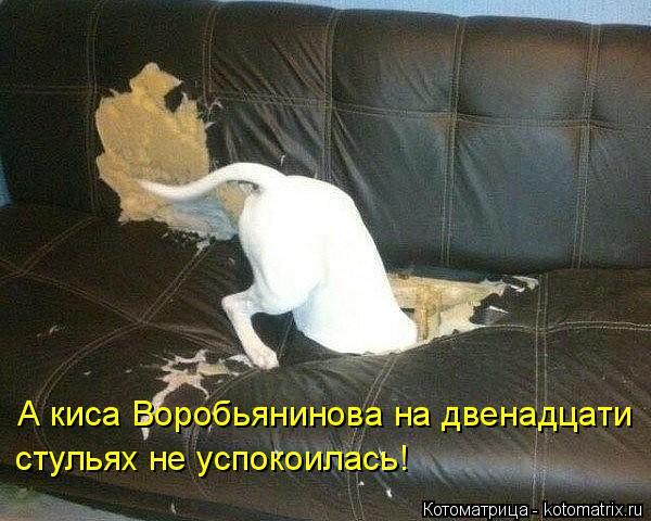Котоматрица: А киса Воробьянинова на двенадцати стульях не успокоилась!