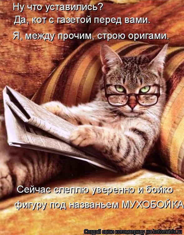 Котоматрица: Ну что уставились? Да, кот с газетой перед вами. Я, между прочим, строю оригами. Сейчас слеплю уверенно и бойко  фигуру под названьем МУХОБОЙК