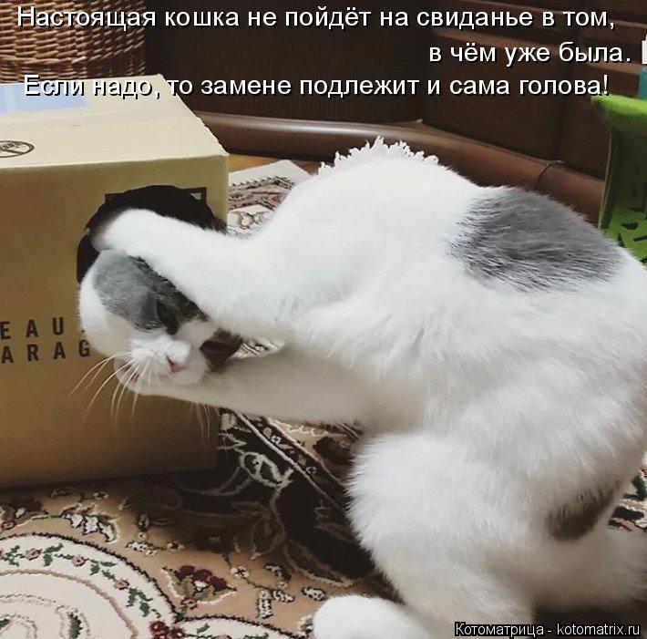 Котоматрица: Настоящая кошка не пойдёт на свиданье в том, в чём уже была. Если надо, то замене подлежит и сама голова!