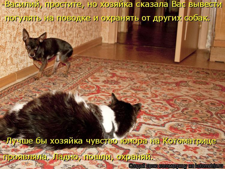 Котоматрица: -Василий, простите, но хозяйка сказала Вас вывести погулять на поводке и охранять от других собак. -Лучше бы хозяйка чувство юмора на Котома?