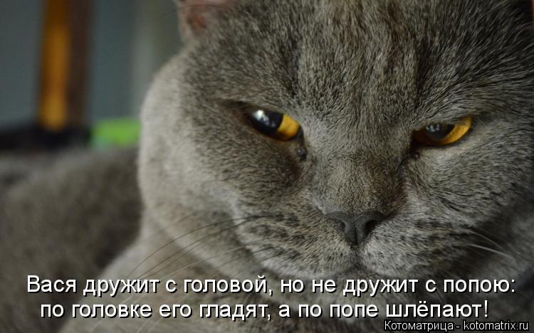 Котоматрица: Вася дружит с головой, но не дружит с попою: по головке его гладят, а по попе шлёпают!