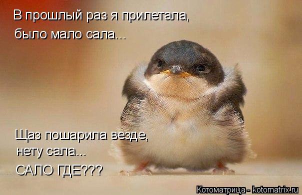 Котоматрица: В прошлый раз я прилетала, было мало сала... Щаз пошарила везде,  нету сала... САЛО ГДЕ???