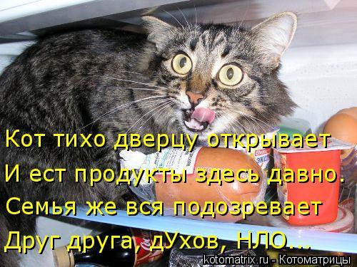 Котоматрица: Кот тихо дверцу открывает И ест продукты здесь давно. Друг друга, дУхов, НЛО... Семья же вся подозревает