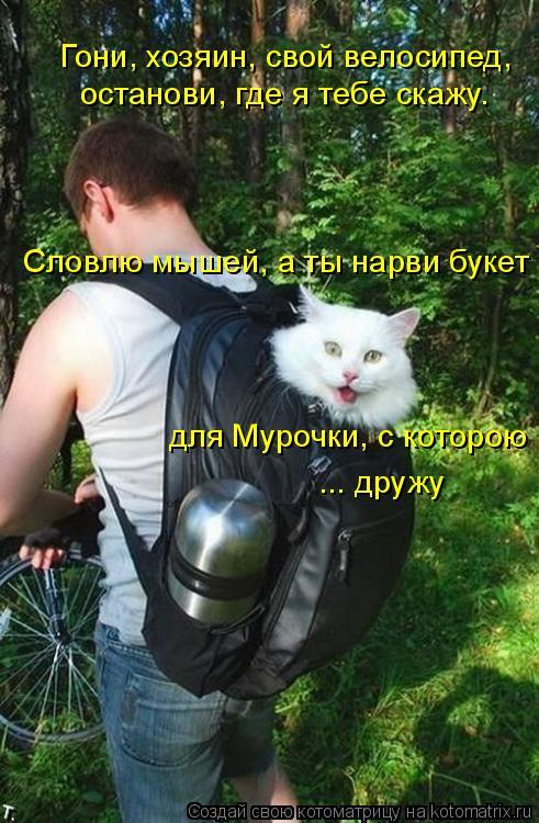 Котоматрица: Гони, хозяин, свой велосипед,  останови, где я тебе скажу. Словлю мышей, а ты нарви букет для Мурочки, с которою ... дружу