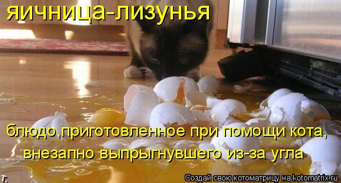 Котоматрица: яичница-лизунья блюдо,приготовленное при помощи кота, внезапно выпрыгнувшего из-за угла