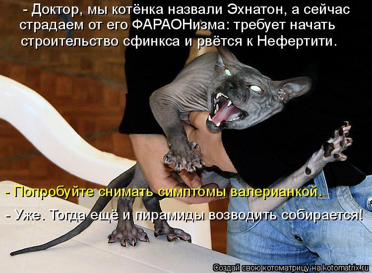 Котоматрица: - Доктор, мы котёнка назвали Эхнатон, а сейчас  страдаем от его ФАРАОНизма: требует начать  строительство сфинкса и рвётся к Нефертити. - Попр