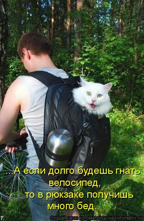 Котоматрица: ...А если долго будешь гнать  велосипед, то в рюкзаке получишь много бед.