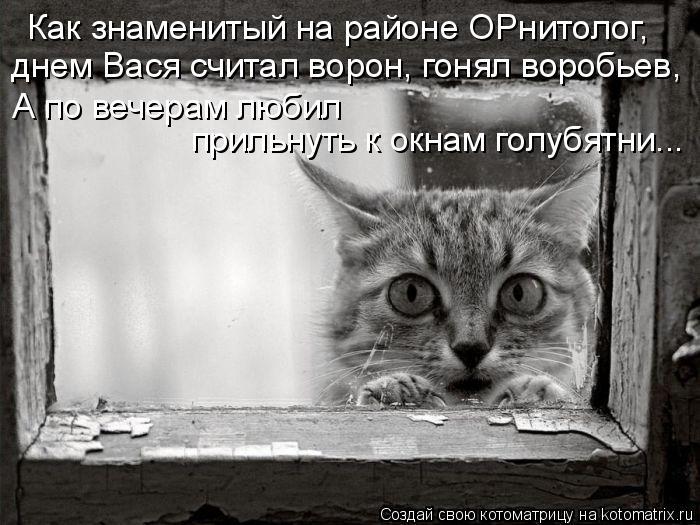 Котоматрица: Как знаменитый на районе ОРнитолог, днем Вася считал ворон, гонял воробьев, А по вечерам любил  прильнуть к окнам голубятни...
