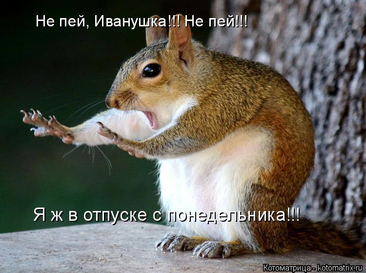 Котоматрица: Не пей, Иванушка!!! Не пей!!! Я ж в отпуске с понедельника!!!