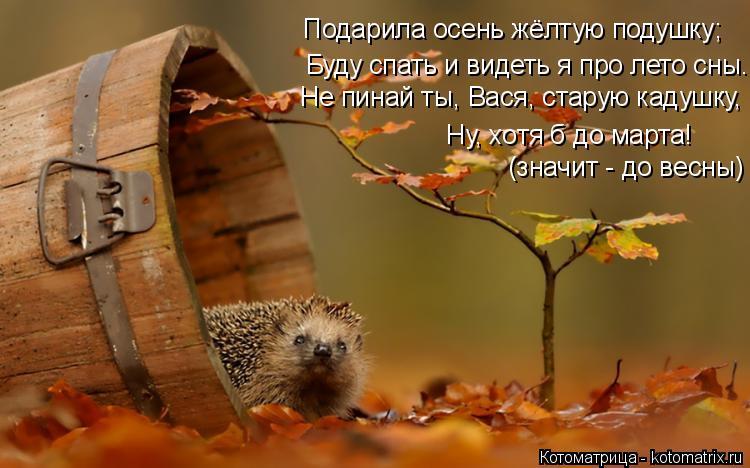 Котоматрица: Подарила осень жёлтую подушку; Не пинай ты, Вася, старую кадушку, Буду спать и видеть я про лето сны. Ну, хотя б до марта! (значит - до весны)