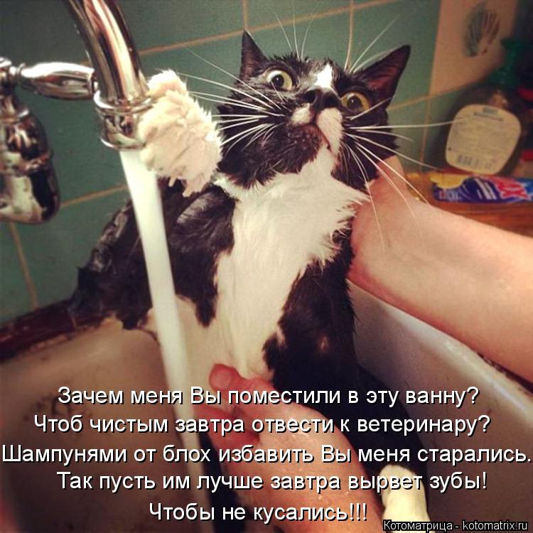Котоматрица: Так пусть им лучше завтра вырвет зубы! Чтобы не кусались!!! Чтоб чистым завтра отвести к ветеринару? Зачем меня Вы поместили в эту ванну? Шамп