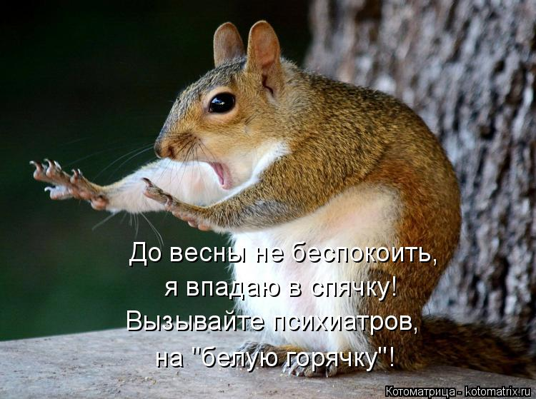 """Котоматрица: До весны не беспокоить, я впадаю в спячку! Вызывайте психиатров, на """"белую горячку""""!"""