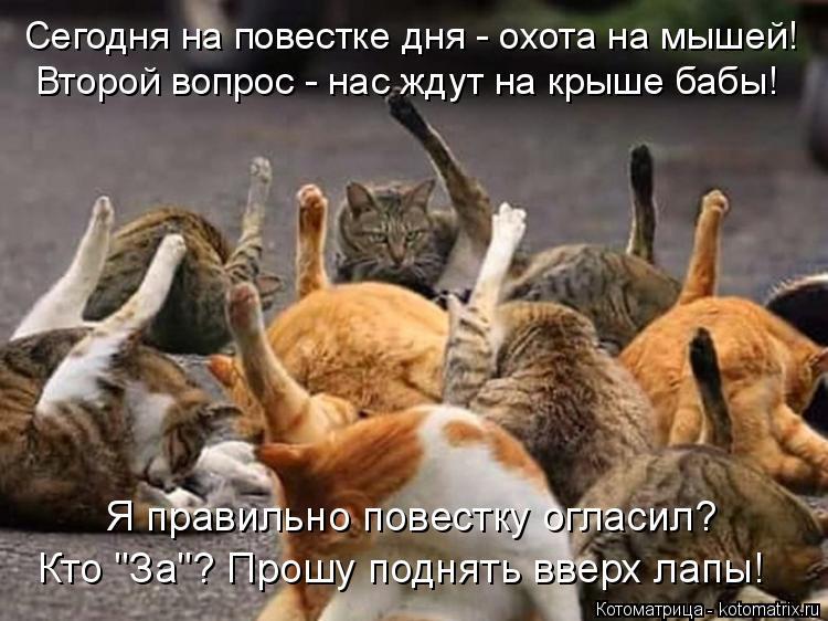 """Котоматрица: Я правильно повестку огласил? Кто """"За""""? Прошу поднять вверх лапы! Второй вопрос - нас ждут на крыше бабы! Сегодня на повестке дня - охота на мыш"""