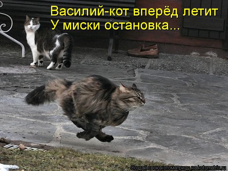 Котоматрица: Василий-кот вперёд летит У миски остановка...