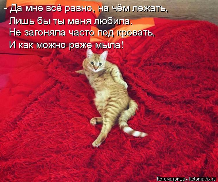 Котоматрица: - Да мне всё равно, на чём лежать, Лишь бы ты меня любила. Не загоняла часто под кровать, И как можно реже мыла!