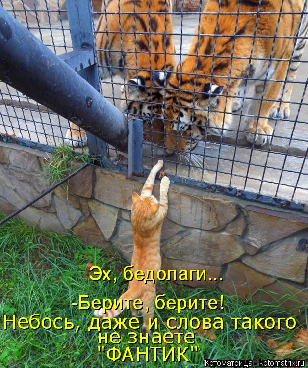 "Котоматрица: -Берите, берите! Эх, бедолаги... Небось, даже и слова такого не знаете ""ФАНТИК"""
