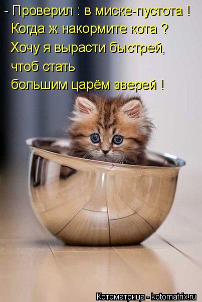 Котоматрица: - Проверил : в миске-пустота ! Когда ж накормите кота ? Хочу я вырасти быстрей, чтоб стать большим царём зверей !