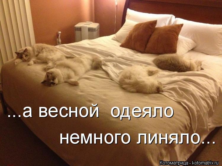 Котоматрица: ...а весной  одеяло немного линяло...
