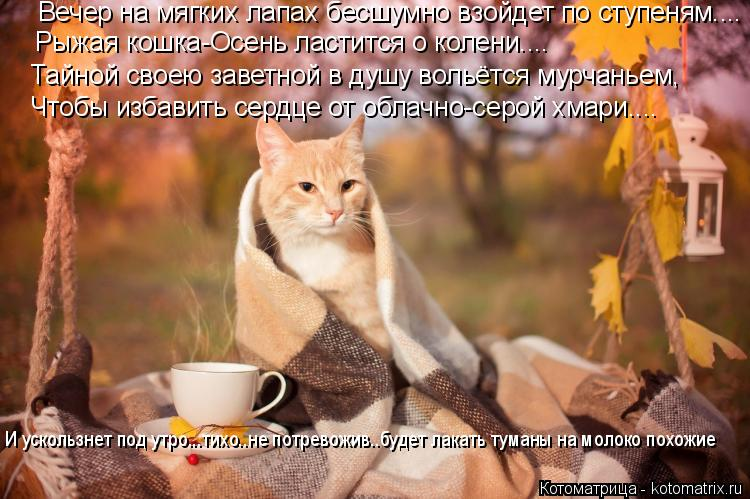 Котоматрица: Рыжая кошка-Осень ластится о колени....  Тайной своею заветной в душу вольётся мурчаньем,  Чтобы избавить сердце от облачно-серой хмари....  И у