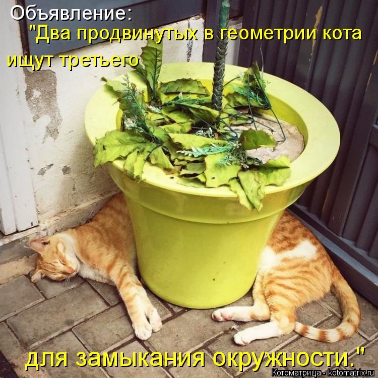 """Котоматрица: Объявление: """"Два продвинутых в геометрии кота ищут третьего для замыкания окружности."""""""