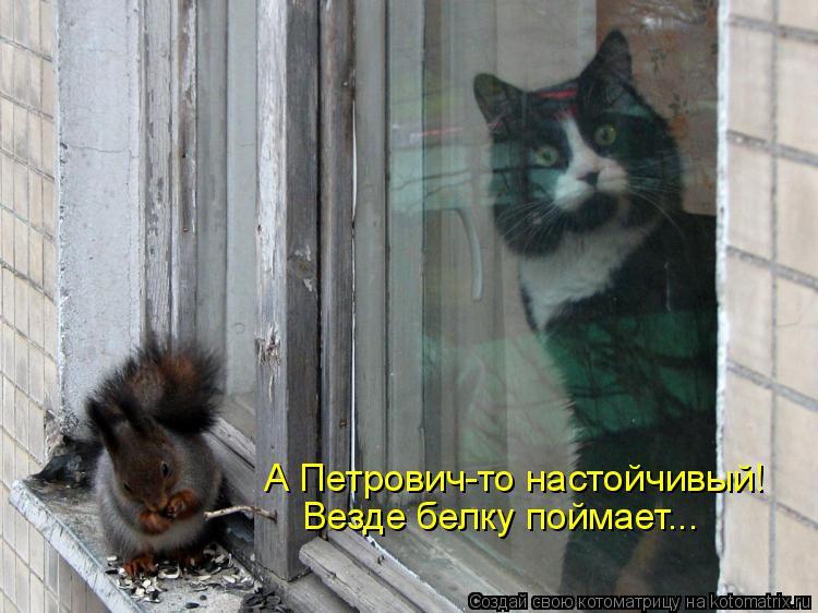 Котоматрица: А Петрович-то настойчивый! Везде белку поймает...