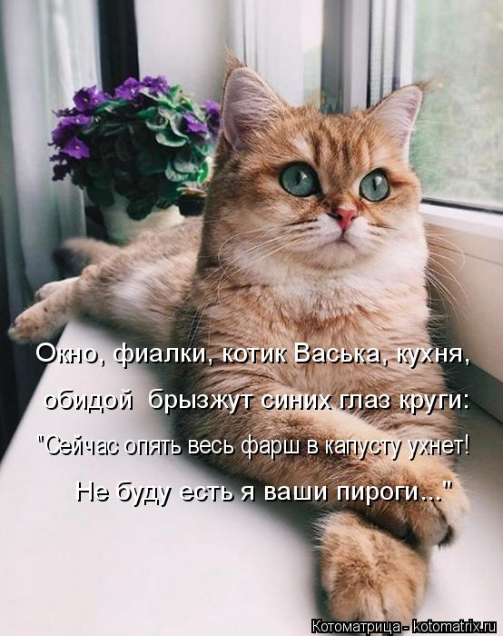 """Котоматрица: Окно, фиалки, котик Васька, кухня, обидой  брызжут синих глаз круги: """"Сейчас опять весь фарш в капусту ухнет! Не буду есть я ваши пироги..."""""""