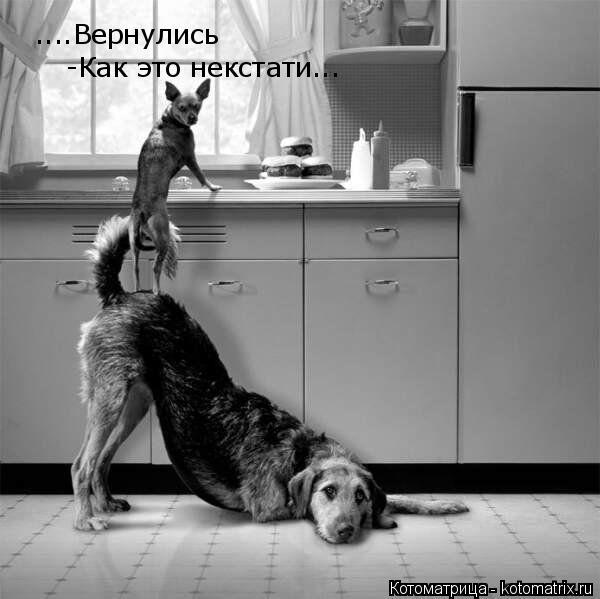 Котоматрица - 3 Kotomatritsa_s