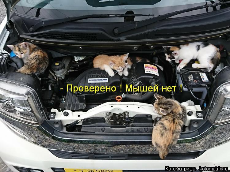 Котоматрица: - Проверено ! Мышей нет !