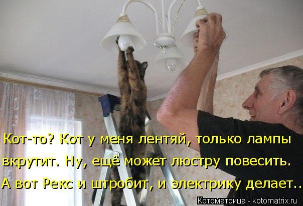 Котоматрица: вкрутит. Ну, ещё может люстру повесить. Кот-то? Кот у меня лентяй, только лампы  А вот Рекс и штробит, и электрику делает...