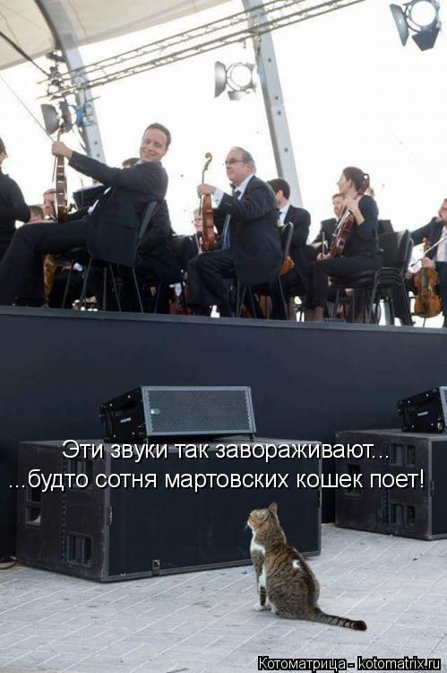 Котоматрица: Эти звуки так завораживают... ...будто сотня мартовских кошек поет!