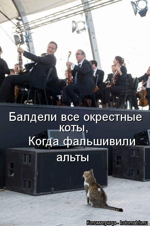 Котоматрица: Балдели все окрестные  коты, Когда фальшивили альты