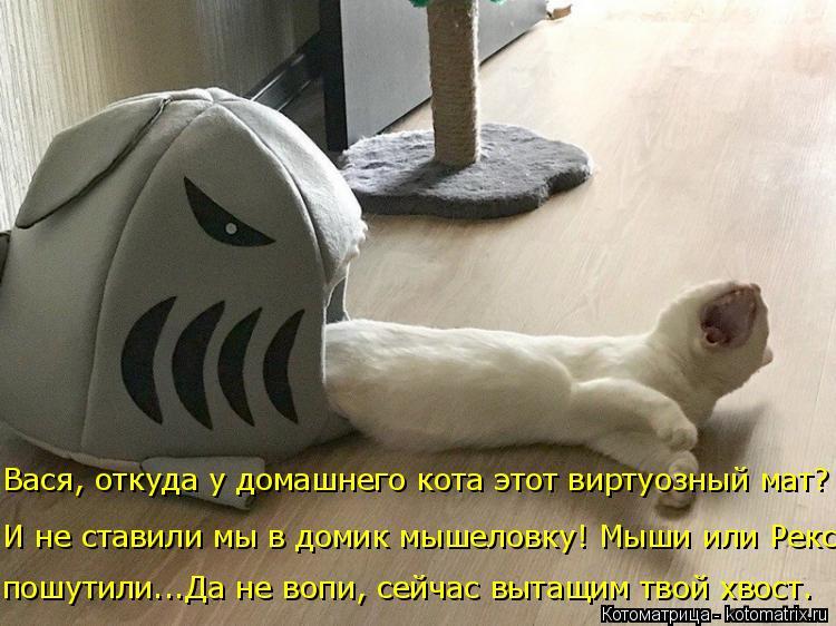 Котоматрица: Вася, откуда у домашнего кота этот виртуозный мат? И не ставили мы в домик мышеловку! Мыши или Рекс пошутили...Да не вопи, сейчас вытащим твой
