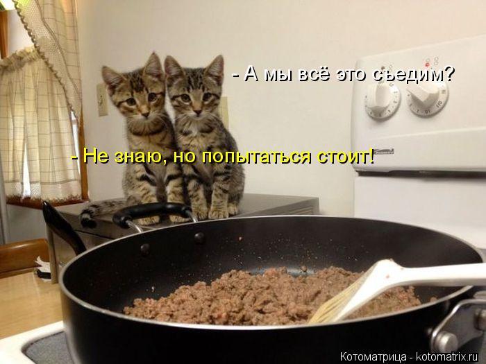 Котоматрица: - Не знаю, но попытаться стоит! - А мы всё это съедим?